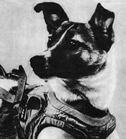 Laika the first animal to orbit Earth