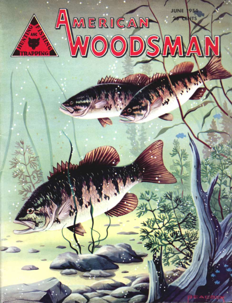 Comic Book Cover For American Woodsman V03 011